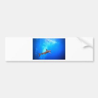 Black-tip reef shark swimming underwater bumper sticker