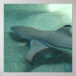 Black Tipped Shark Poster