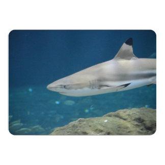 "Black Tipped Shark Swimming Underwater 5"" X 7"" Invitation Card"