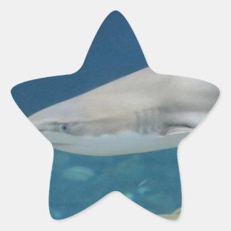 Black Tipped Shark Swimming Underwater Star Stickers