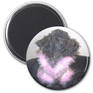 Black Toy Poodle in Pink Sweater oh la la 2 Inch Round Magnet
