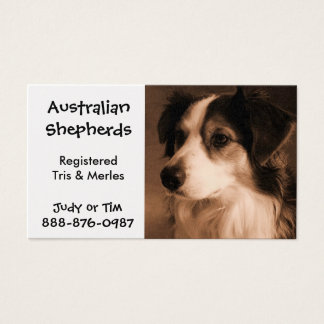 Black Tricolored Australian Shepherd Breeding Business Card