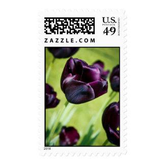 Black Tulip Postage