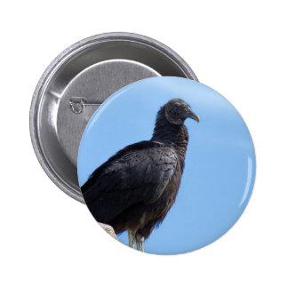 Black Turkey Vulture - Coragyps atratus Pins