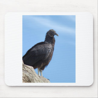 Black Turkey Vulture - Coragyps atratus Mouse Pad