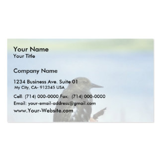 Black turnstone in hand business cards