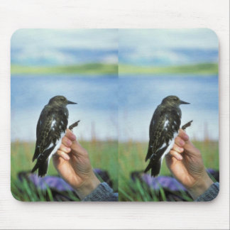 Black turnstone in hand mouse pad