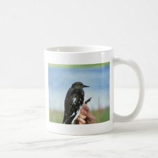 Black turnstone in hand mugs