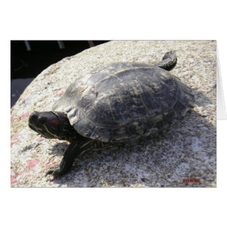 Black Turtle Greeting Card
