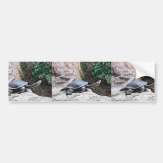 Black Turtle With Long Neck On The Rocks Bumper Stickers