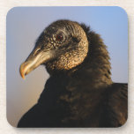 black vulture beverage coasters