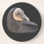 black vulture coaster