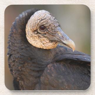 black vulture coasters