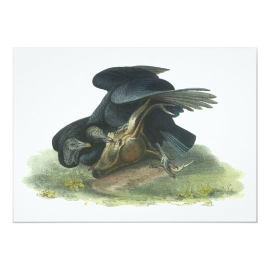 Black Vulture, John Audubon Card