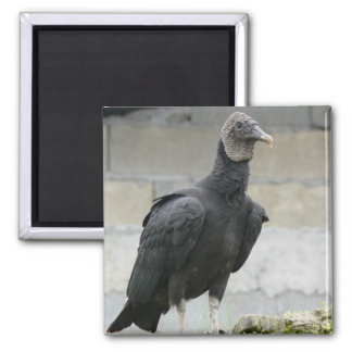 Black Vulture On The Hill 2 Inch Square Magnet