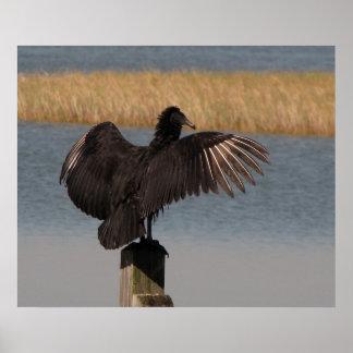 Black Vulture Poster