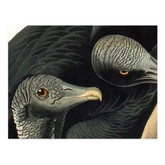 Black Vultures, John James Audubon Postcard