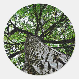 Black Walnut Trunk and Branches Classic Round Sticker