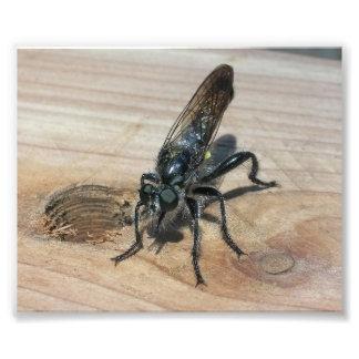 Black Wasp Art Photo