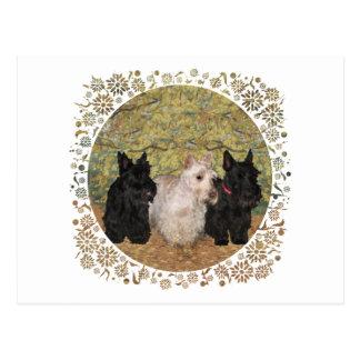 Black & Wheaten Scotties in the Fall Postcard