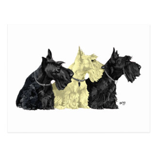 Black & Wheaten Scottish Terriers Postcard