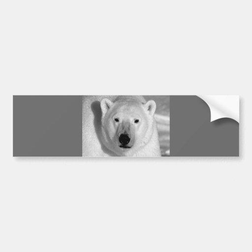 Black & Whit Polar Bear Bumper Stickers