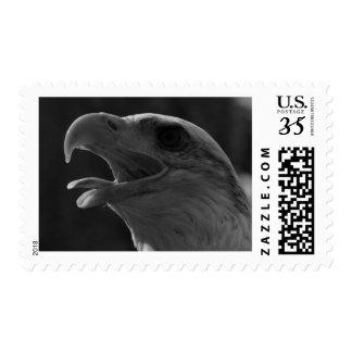 Black & White American Bald Eagle Postage