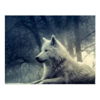Black & White Arctic Wolf Postcard
