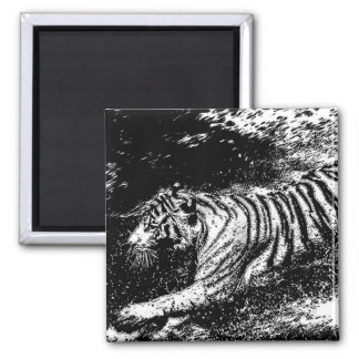 Black & White Attacking Tiger Fridge Magnet