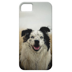 Case-Mate Vibe iPhone 5 Case with Australian Shepherd Phone Cases design