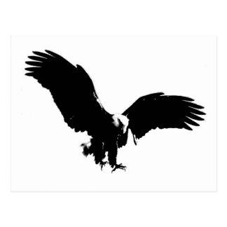 Black & White Bald Eagle Silhouette Postcard