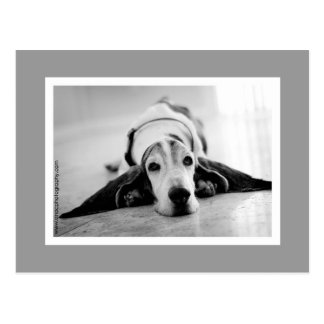 Black & White Basset Postcard