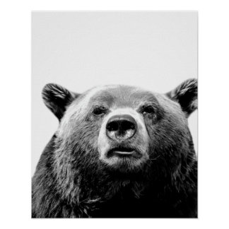 Black white bear woodland animal peekaboo photo poster