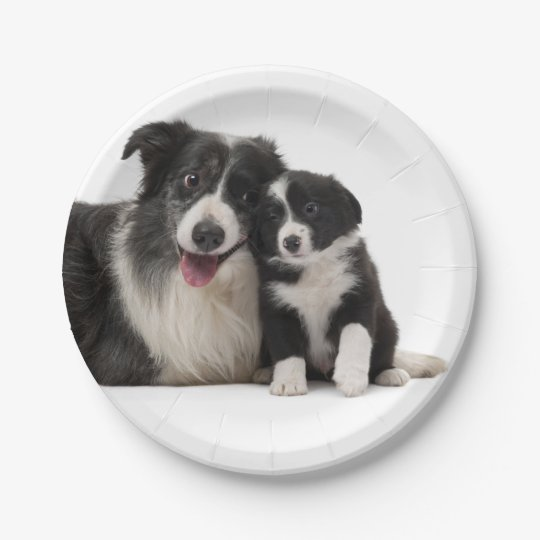 Black \u0026 White Border Collie Puppy Dog Paper Plates  sc 1 st  Zazzle : dog paper plates - pezcame.com