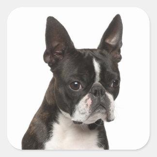 Black & White Boston Terrier Puppy Dog Sticker