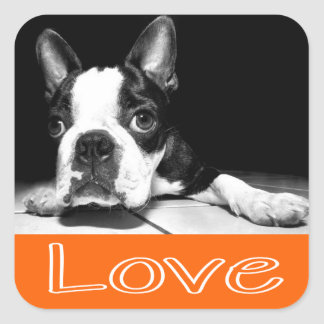 Black & White Boston Terrier Puppy Dog Sticker