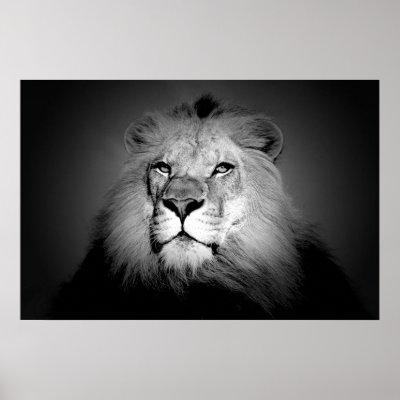 White lion face images - photo#20