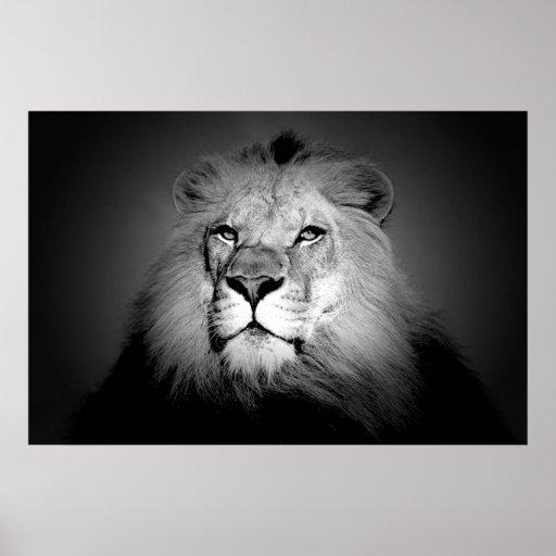 Black & White / BW Lion Poster Print - Lion Face