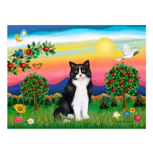 Black & White Cat - Bright Country Postcard