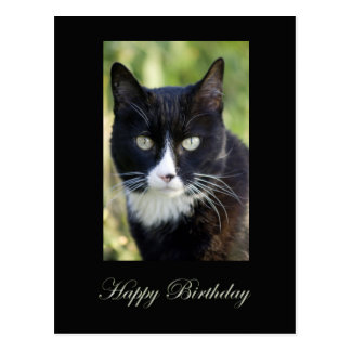 Black & White cat, Happy Birthday postcard. Postcard