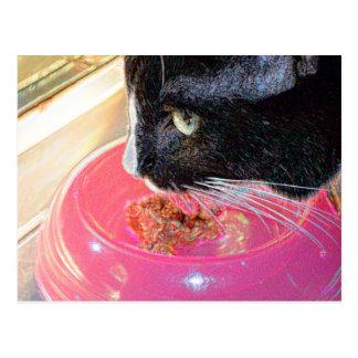 black white cat head pink bowl sparkle animal pet postcard