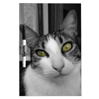 Black White Cat Photo Dry-Erase Board