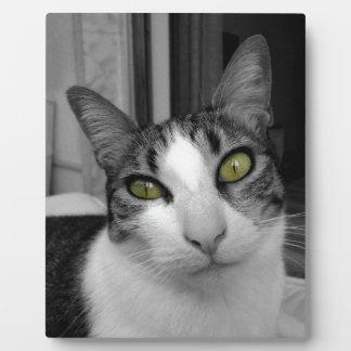 Black White Cat Photo Plaque