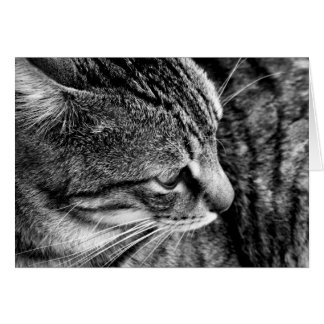 Black & White Cat Photography Card