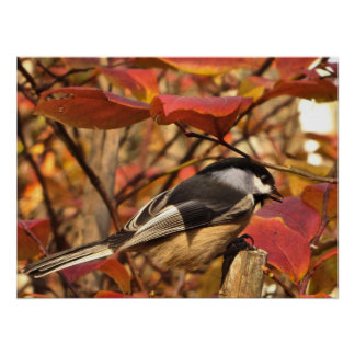 Black White Chickadee Bird in Pink Autumn Leaves Poster