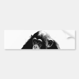 Black White Chimpanzee Bumper Sticker