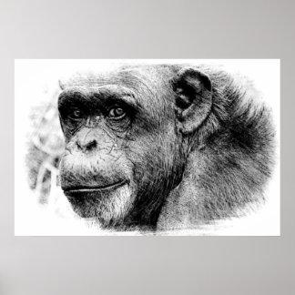 Black & White Chimpanzee Digital Sketch Artwork Poster