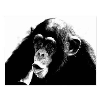 Black White Chimpanzee Postcard