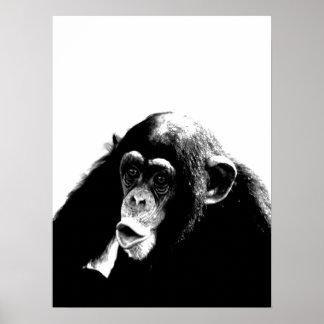 Black White Chimpanzee Poster