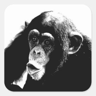 Black White Chimpanzee Square Sticker